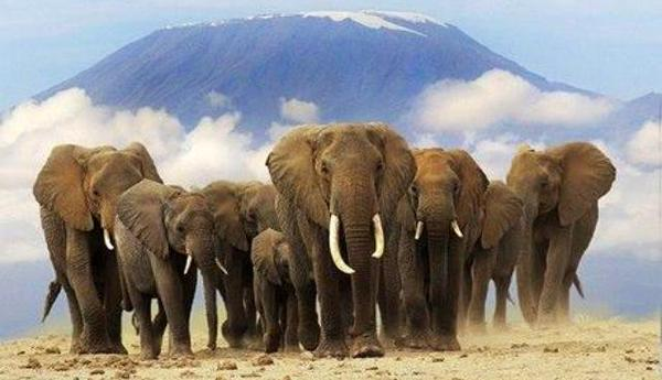 Perierga.gr - Η Ζιμπάμπουε... εξάγει ελέφαντες