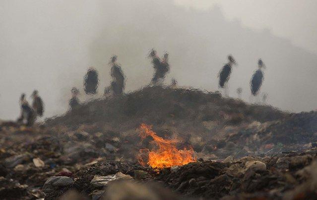 perierga.gr - Διάφορες εκφάνσεις της φωτιάς!