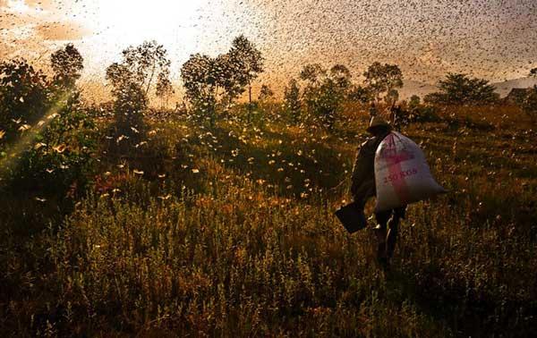 perierga.gr - Πανέμορφες εικόνες ζώων που μεταναστεύουν!