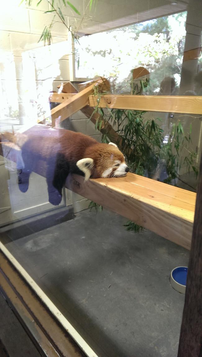 perierga.gr- Πολύ κουρασμένα ζώα!