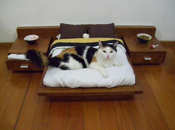 perierga.gr - Κακομαθημένες γάτες!