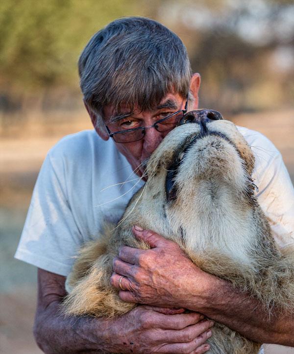 perierga.gr - Αγκαλιές και φιλιά με ένα... λιοντάρι!