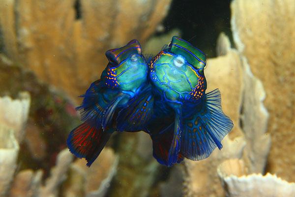 perierga.gr - Παράξενα και πανέμορφα πλάσματα του βυθού!