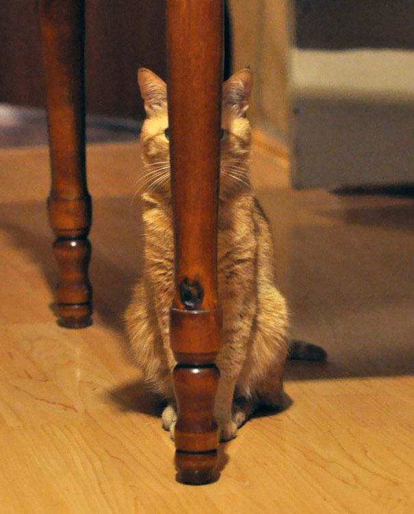 perierga.gr - Γάτες... νίνζα!