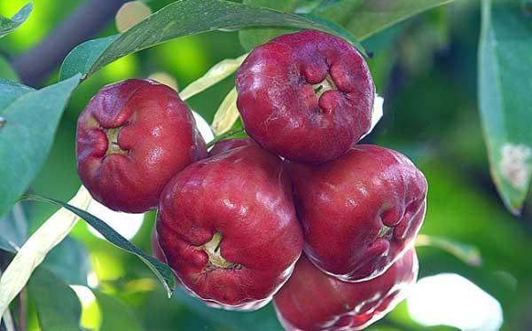 Τα πιο παράξενα μήλα στον κόσμο