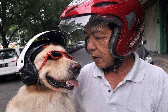 perierga.gr - Ο καλύτερος μηχανόβιος σκύλος!