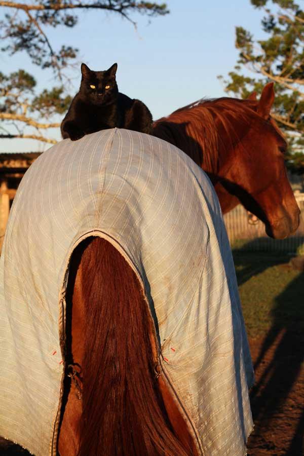 perierga.gr - Αυτός ο γάτος λατρεύει την ιππασία!