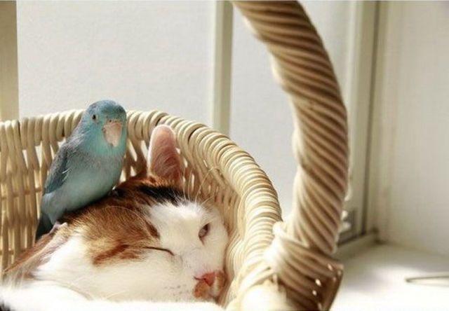 perierga.gr - Μια γάτα λατρεύει ένα παπαγαλάκι!
