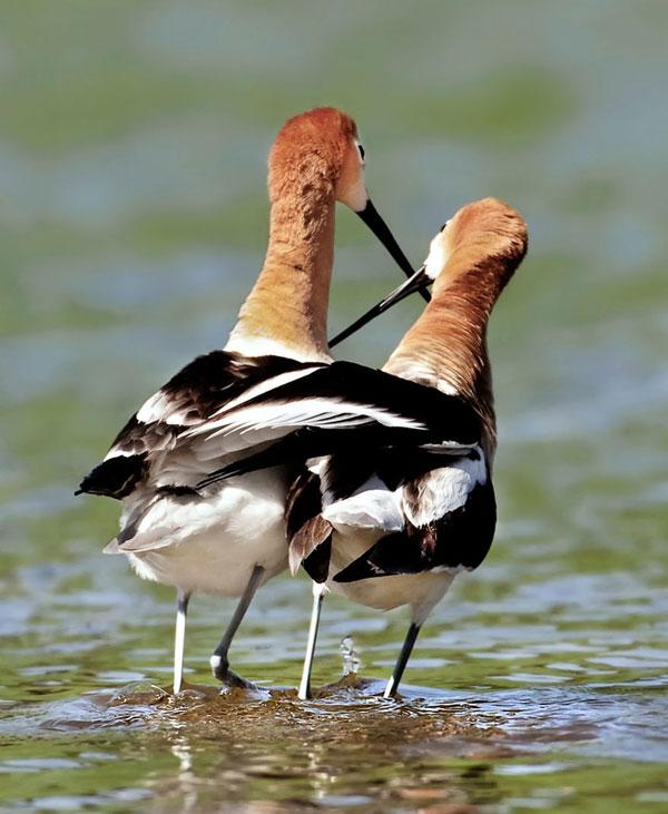 perierga.gr - Τα πτηνά της αγάπης!