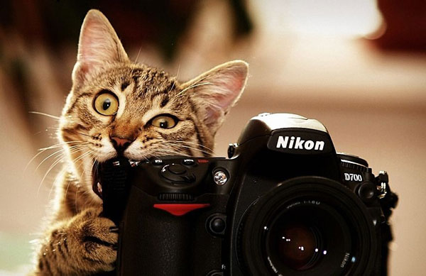 perierga.gr - Tα ζώα τα πάνε καλά με την κάμερα!