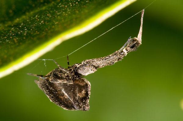 perierga.gr - Aράχνη υφαίνει ηλεκτροστατικό ιστό!