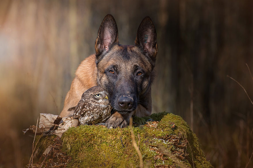 perierga.gr- Σκύλος... κολλητός με κουκουβάγια!