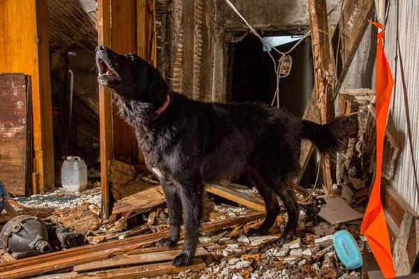 perierga.gr - Σκληρά εργαζόμενα... σκυλιά!
