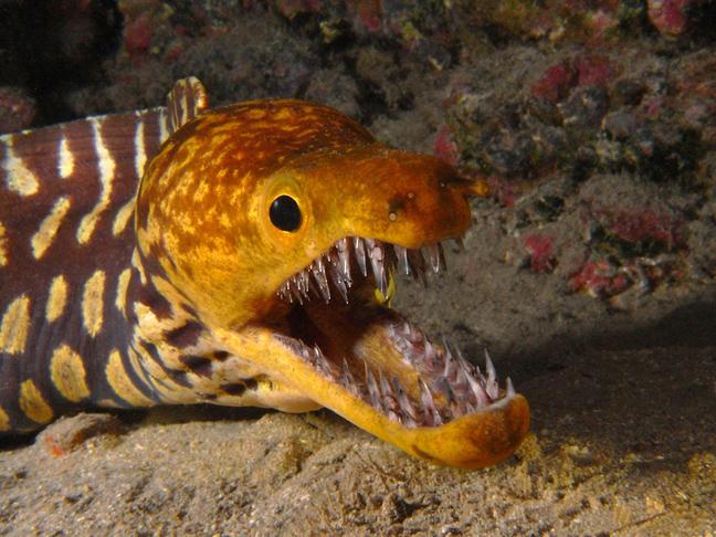 perierga.gr- Πλάσματα του βυθού με τρομακτικά δόντια!