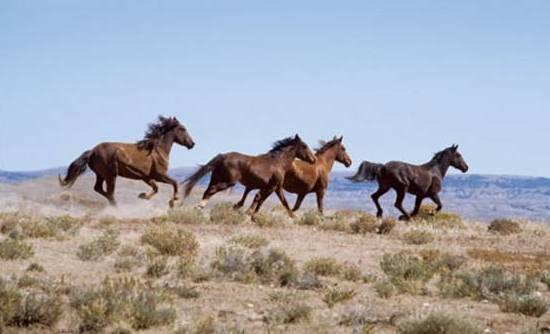 Perierga.gr - Άγρια άλογα για τη διάσωση σπάνιου οικοσυστήματος