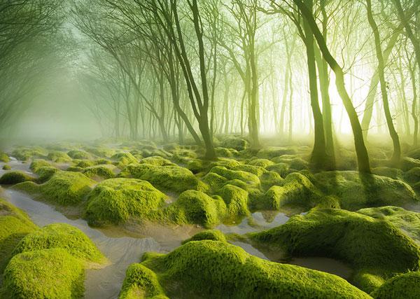 Perierga.gr - Μυστηριώση δάση σε διάφορα μέρη του πλανήτη