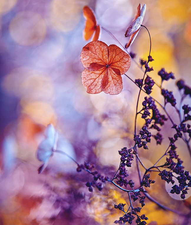 Perierga.gr - Εκπληκτικές εικόνες από κήπους