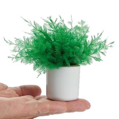 perierga.gr - Φυτό εσωτερικού χώρου χωρίς πότισμα!