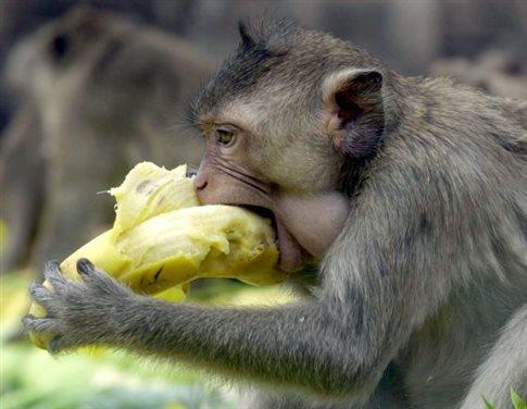 Perierga.gr - Ζευγάρι πλούσιων Ινδών όρισε κληρονόμο του έναν πίθηκο