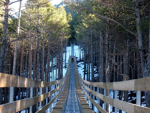 perierga.gr - Μαγευτική διαδρομή με τρενάκι στο δάσος!