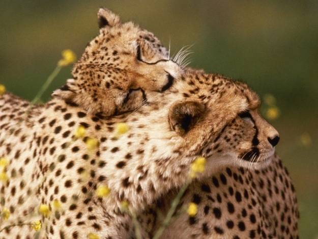 perierga.gr - Ζευγάρια ζώων πολύ αγαπημένα!