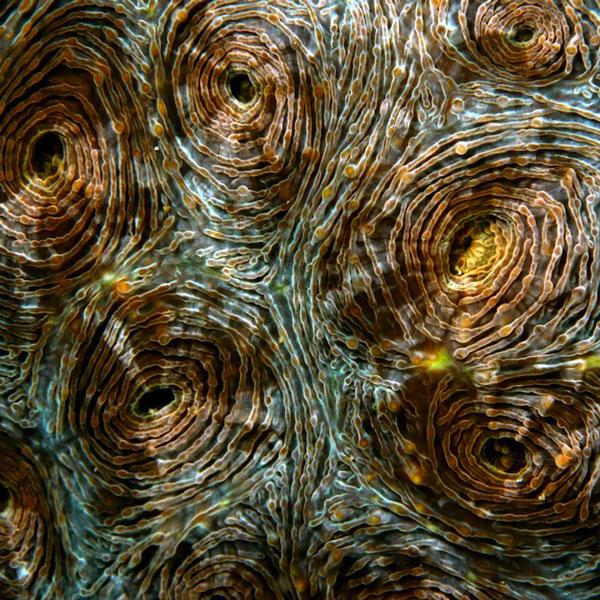perierga.gr - Eντυπωσιακοί σχηματισμοί κοραλλιών!