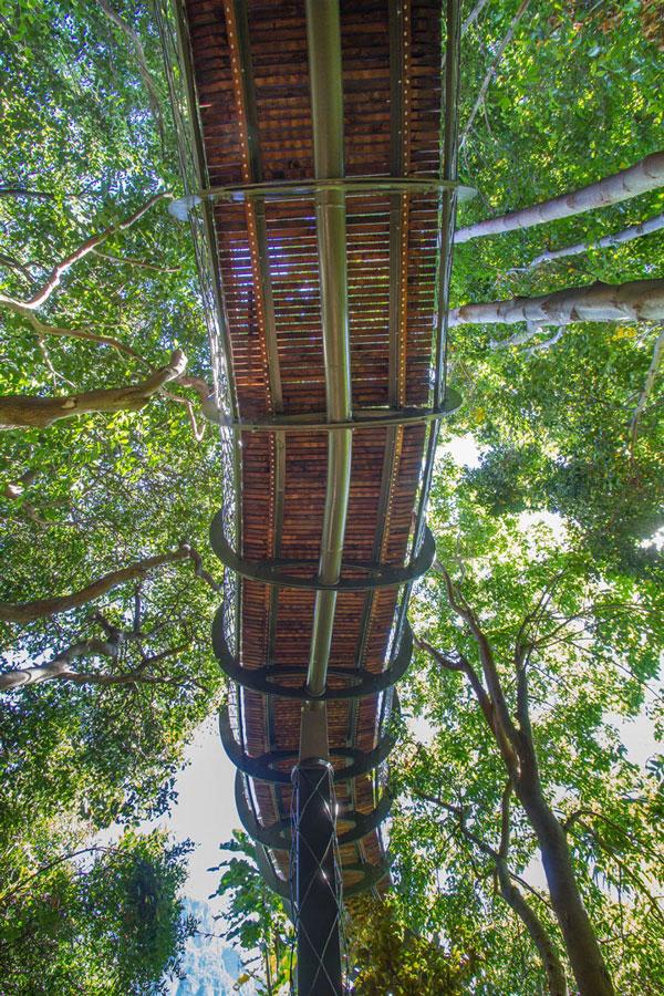 perierga.gr - Περπατώντας... πάνω στα δέντρα!