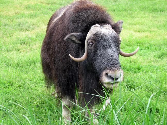 perierga.gr - Τα 10 πιο δυνατά ζώα στον κόσμο!