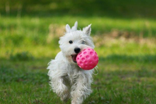 perierga.gr - Τα σκυλιά ξέρουν ποιος είναι αξιόπιστος και ποιος όχι!