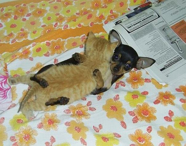 ύπνος ζώα ζευγάρια ζώων