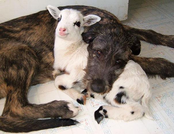perierga.gr - Aσυνήθιστα ζευγάρια ζώων στην αγκαλιά του Μορφέα!