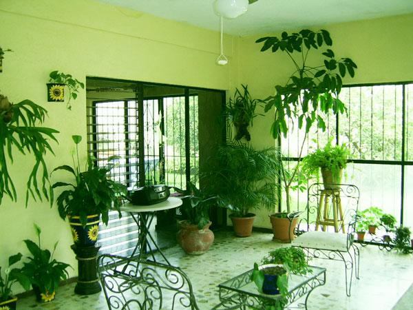 perierga.gr - 5 οφέλη από τα φυτά εσωτερικού χώρου