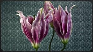 perierga.gr - Η άνθιση των λουλουδιών σε ένα βίντεο!