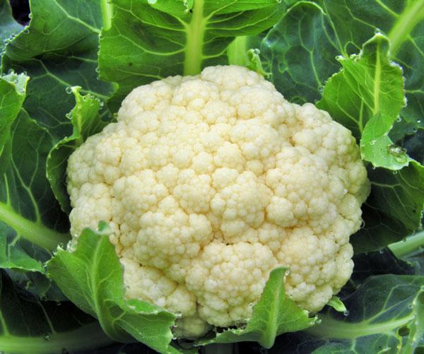 """perierga.gr - Τα 15 πιο """"καθαρά"""" τρόφιμα, χωρίς φυτοφάρμακα!"""