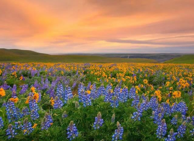 perierga.gr - Ανοιξιάτικοι προορισμοί γεμάτοι λουλούδια!