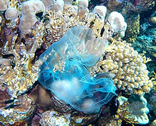 perierga.gr - Ο Μεγάλος Κοραλλιογενής Ύφαλος τρώει τη ρύπανση από πλαστικά!