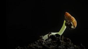 perierga.gr - Ο σπόρος γίνεται λουλούδι σε ένα βίντεο!