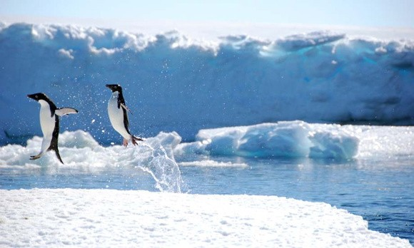 perierga.gr - Μια βόλτα με drone στην Ανταρκτική!