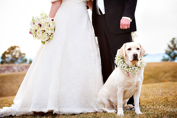 Σκυλιά σε γαμήλιες φωτογραφίες!