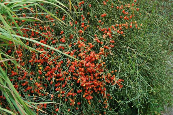 perierga.gr - Μοναδικό φυτό ερωτοτροπεί υπό την ελληνική πανσέληνο!