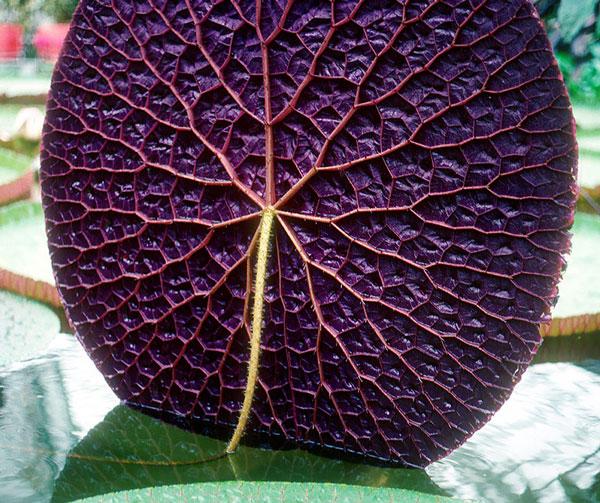 perierga.gr - Η γεωμετρία στα φυτά!