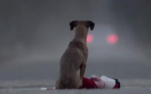 perierga.gr - Διδακτικό βίντεο για την εγκατάλειψη των σκύλων!