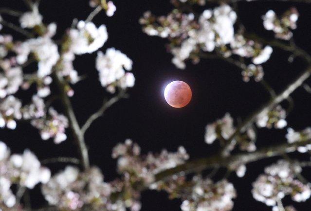 perierga.gr - Το φεγγάρι στο νυχτερινό ουρανό είναι μαγικό!