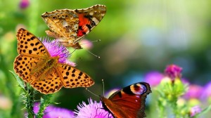 perierga.gr - Η μαγεία της φύσης σε μόλις 1,5 λεπτά!