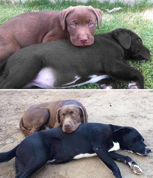 perierga.gr - Σκυλιά από κουτάβια σε ενήλικα!