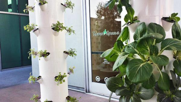 perierga.gr - Εστιατόριο καλλιεργεί τα λαχανικά... δίπλα στα τραπέζια!