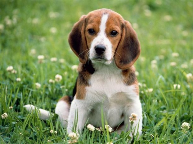 perierga.gr - Τα θηλυκά σκυλιά είναι πιο φιλικά!
