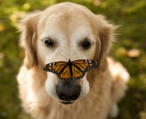 πεταλούδες