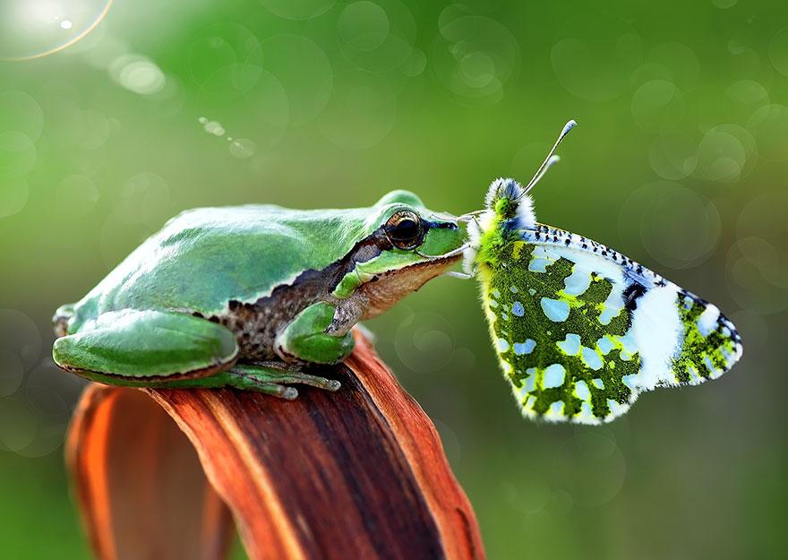 perierga.gr - Ζώα ανάμεσα σε πεταλούδες...