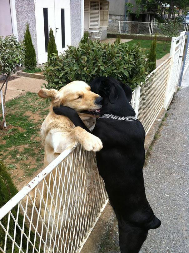 perierga.gr - Σκυλιά φιλαράκια που δεν χωρίζουν με τίποτα!
